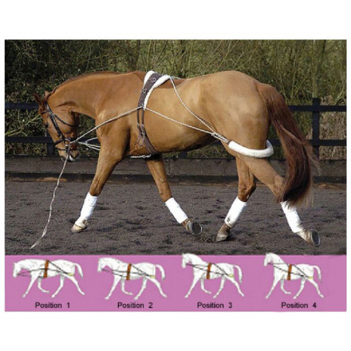 GFS Lunging / Training Aid - OFFER